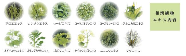 和漢植物エキス内容